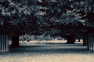 trees park blackandwhite