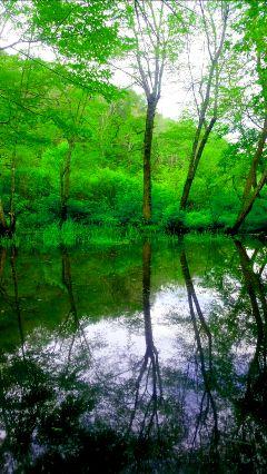 freetoedit lagoon tree reflections purple