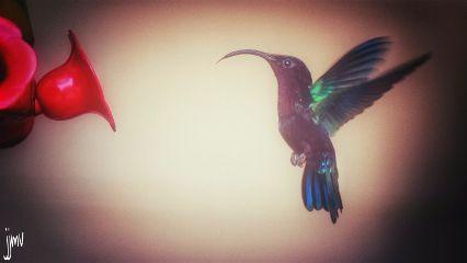 colorful photography bird nikon