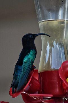 nikon bird photography colorful