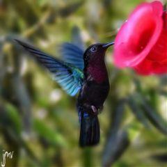 photography nikon bird
