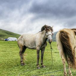 freetoedit horse china tibet
