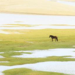 freetoedit horse china