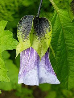 flower blossom bloom naturephotography macrophotography
