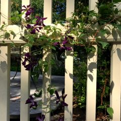 fence plant flowers nature shadows freetoedit