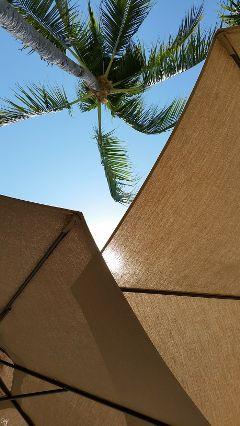 freetoedit unedited umbrellas sun trees