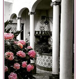 patio jardin indoorgarden jardininterior columnas