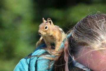 outdoors cute wildlife