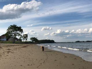 freetoedit beach shore cloudshapes dogsofpicsart