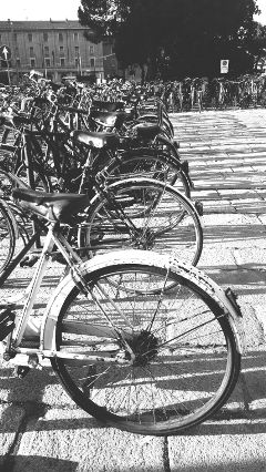 bicycle city streetphotography blackandwhite bologna freetoedit