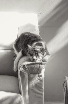 cat sleep blackandwhite