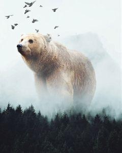 freetoedit bear forest birds