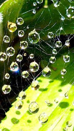 waterdrops garden spiderweb freetoedit