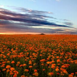 freetoedit naturephotography colorful flower summer