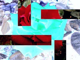 negativeeffect rose shapes freetoedit remixit