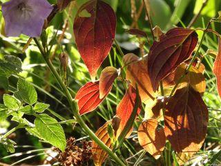 leaves nofilter shadowandlight nature