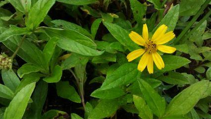 flower flowers dirt green naturephotography