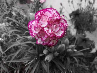 flower photography blackandwhite cute freetoedit