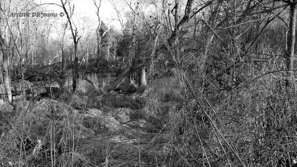 dpcblackandwhite nature trees swamp fall