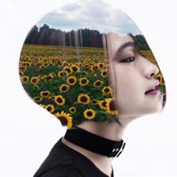 freetoedit sunflowers girl hairs dubleexposure