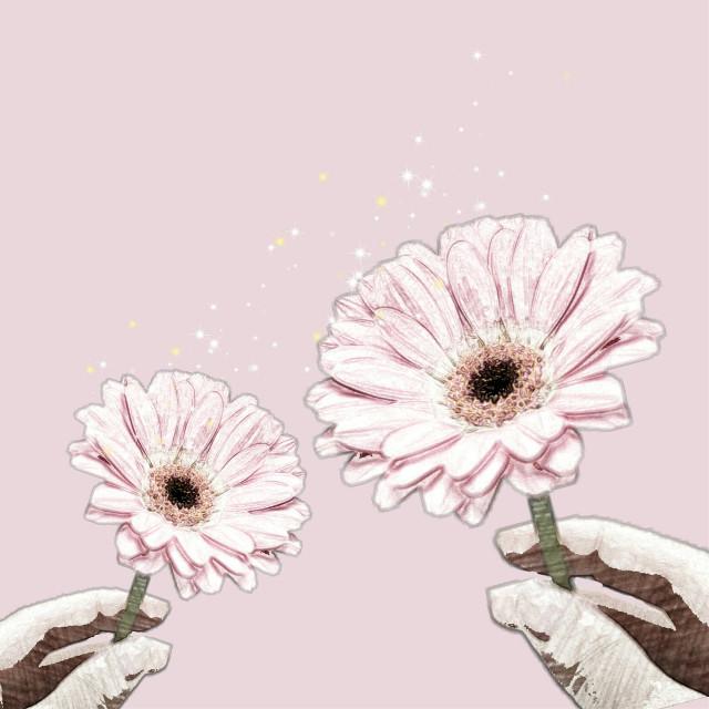 #sketchereffect #daysies #pink #sparkles