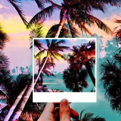freetoedit palmtrees beach sunset overlay