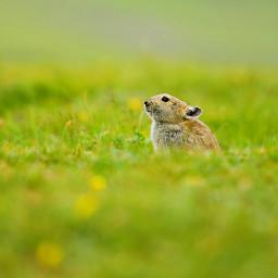 freetoedit nature animals