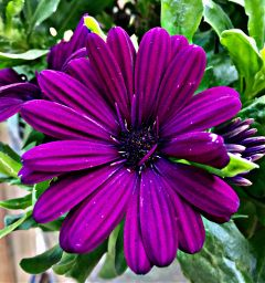 purple flower flowerphotography