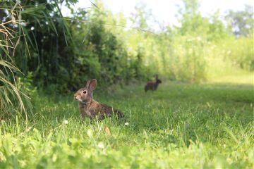 freetoedit love noedit nofilter bunny