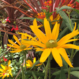outandabout takingphotos beautifulflowers colorfulworld noneedtoedit