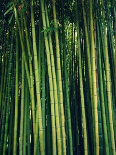 freetoedit bamboo nature green colors