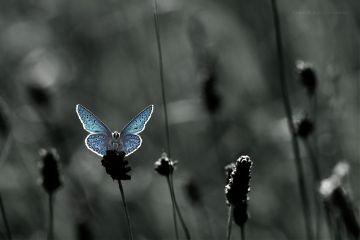 deeliriouss nature photography blue butterfly