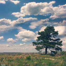 freetoedit blackwaternaturepreserve tree bigsky myoriginalphotothank