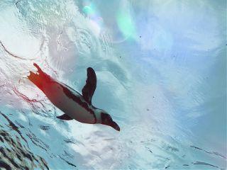 penguin aquarium japan tokyo swimming