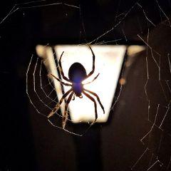 spider lightpole