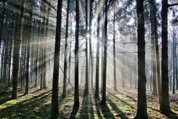 bokeh sunlight mist naturephotography nature