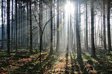 freetoedit remixit nature forest sunrays