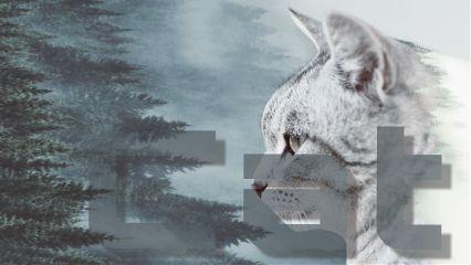 freetoedit cat title words forrest