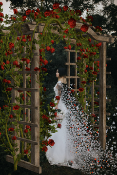 freetoedit weddingdispersion wedding weddingdress arch