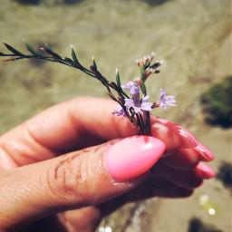 freetoedit flower sea summer summervibes