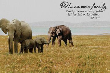 freetoedit elephants elephant elephantstickers family