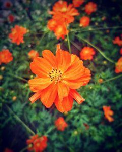 flowers summer holidays beautifulnature nature