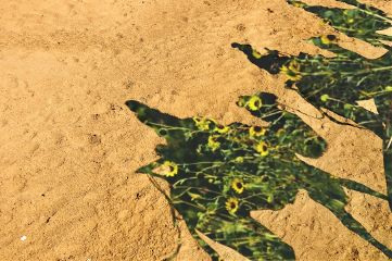 doubleexposure desert shadows camel flowers freetoedit