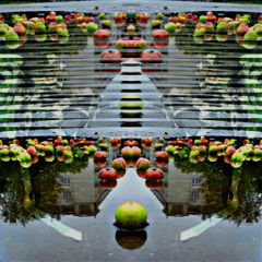 freetoedit apples water reflection blendingtools