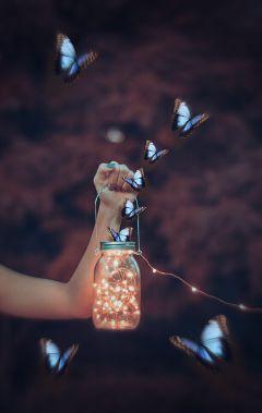 freetoedit butterfly butterfliesstickerremix butterflywings butterflies