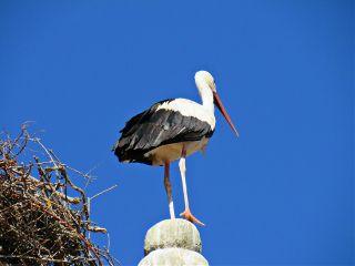 photography nature bird stork sky freetoedit