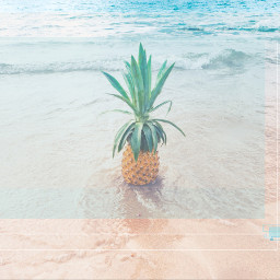 freetoedit pineapple squares outline beach