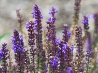 freetoedit texture flowers