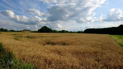 freetoedit landscape nature farmland summer