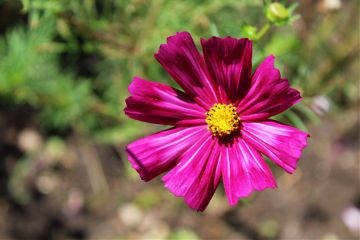 photography flower nature emotions pink freetoedit